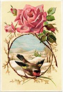 Розы - картинки для декупажа
